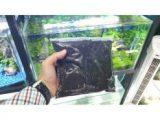 Pasir Malang Halus 1.5 Kg – 65A953 – Original Asli